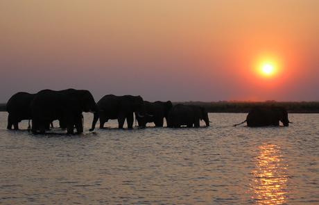 Botswana Chobe Chilwero